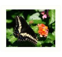 flutterfly (Orton effect) Art Print