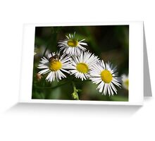 White aster and a little visiting bee.  Greeting Card