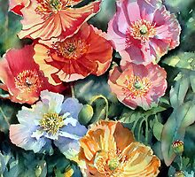 Sunlit Iceland poppies by Ann Mortimer