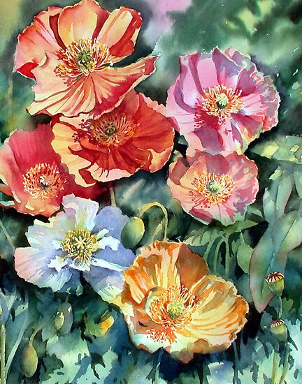 Sunlit Iceland poppies by Ann Mortimer