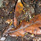 Little golden goblets of slime by MattRooney