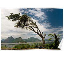 Coast Tree Poster