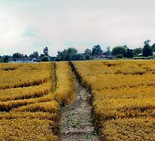 Tracks in the cornfield by missmoneypenny