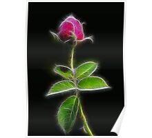 Dark Rose Poster