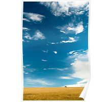 Barley field in summer Poster