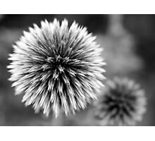 Spiked Photographic Print