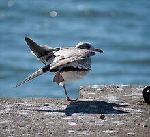 acrobatic seagull by Antonio Paliotta
