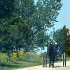 mennonite boy driving buggy by Leeanne Middleton
