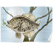 Crappie Time 2 - Fishing Design Poster