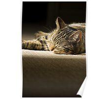 Bella - Cat Nap Poster