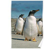 Resevoir Penguins Poster