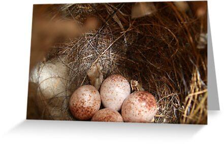 Wren Bird Nest by Penny Odom