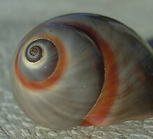 Sea snail shell no 2 by valandsnake