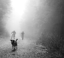 Fog Dog -Mt Fromme, winter '08 by car1edb