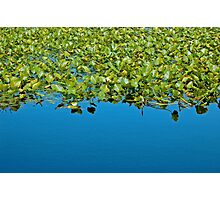 Blues and Greens Photographic Print
