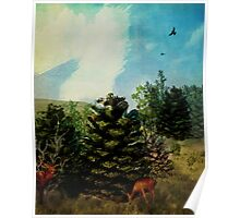 Pine Cone Forest Poster