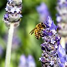 There's No Bee in Lavender by Nick Sage