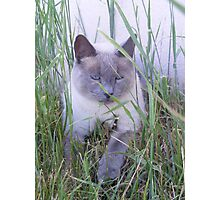 Chillin' in the Grass Photographic Print