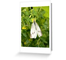A delicate cabbage white butterfly. Greeting Card