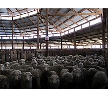 The Holding Pen - Deeargee Woolshed, Northern Tablelands, NSW, Australia Photographic Print