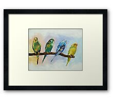Four Parakeets Framed Print