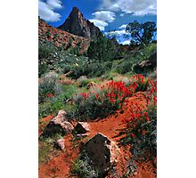 Trail to the Watchman Photographic Print