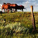 Copper Horses by Kay Kempton Raade