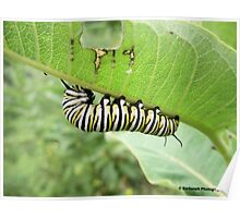 Caterpillar Munching on a Leaf Poster
