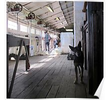 The Sheep Dog - Australian Working Kelpie Poster