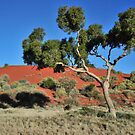 Cordillo Tree by Bryan Cossart