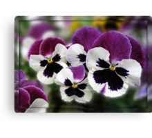 Rose Wing Pansies in Mirrored Frame Canvas Print