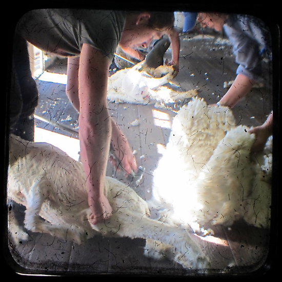 The Shearer & The Rouseabout - TTV by Kitsmumma