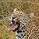 Angry leopard by jozi1