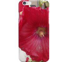 Colorful Flower, Canyon Road, Santa Fe, New Mexico iPhone Case/Skin