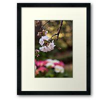 Blossom Bee Framed Print