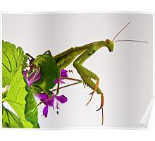 Mantis 3 Poster
