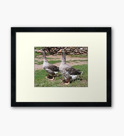 Pilgrim Geese Framed Print