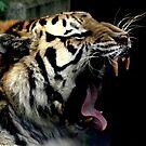 Big Cat Yawn by RockyWalley