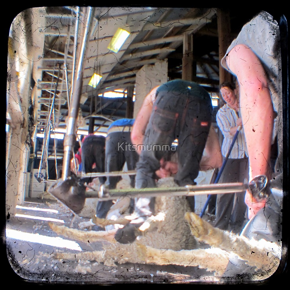 Heads Down, Bums Up - Shearing - TTV by Kitsmumma