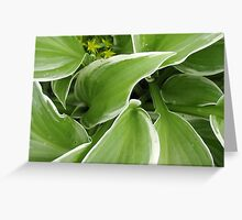 Green Fingers Greeting Card