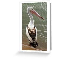 young pelican Greeting Card
