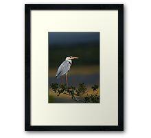 Majestic Heron Framed Print
