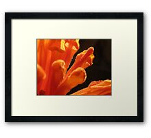 ~ Orange Spice ~ Framed Print