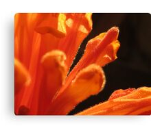 ~ Orange Spice ~ Canvas Print