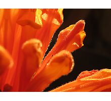 ~ Orange Spice ~ Photographic Print