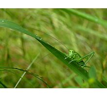 Locust Photographic Print