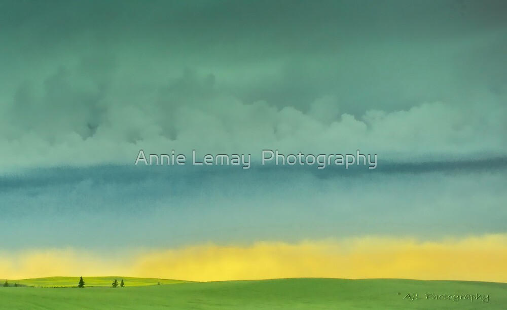 Alberta Fields by Annie Lemay  Photography