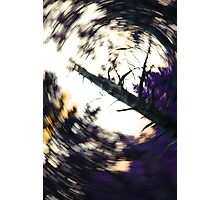 The Dying Tree Photographic Print