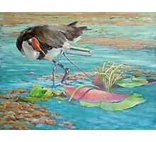Jacana at Mareeba Wetlands Photographic Print