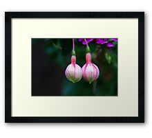 Morning Delight Framed Print